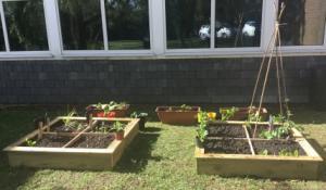 Gardening club 11