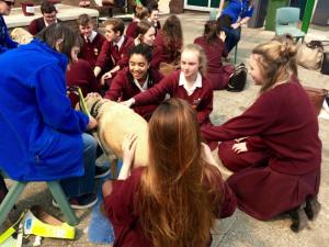 Guide Dogs  (3)