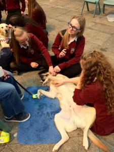 Guide Dogs  (5)