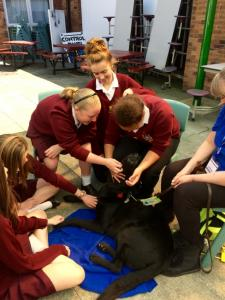 Guide Dogs  (7)