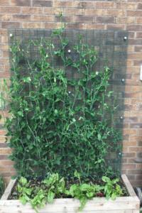 Marafiki Garden 06